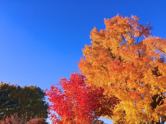 Autumn Leaves From My Drive Through Ontario Canada